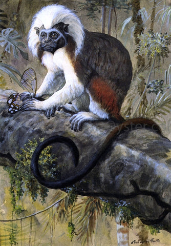 Louis Agassiz Fuertes Cotton-Topped Tamarin - Hand Painted Oil Painting