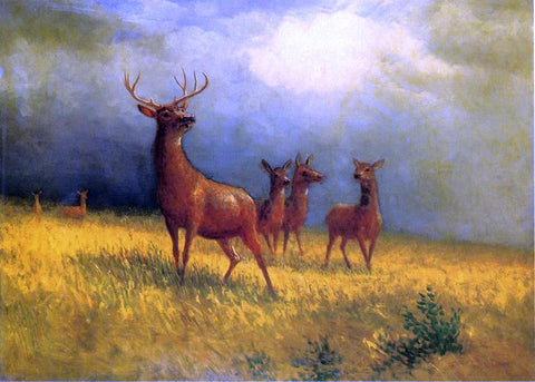 Albert Bierstadt Deer in a Field - Hand Painted Oil Painting