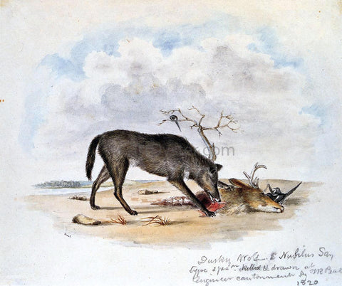 II Titian Ramsey Peale Dusky Wolf (Lupus Nubilus) (also known as Devouring a Mule-Deer Head) - Hand Painted Oil Painting