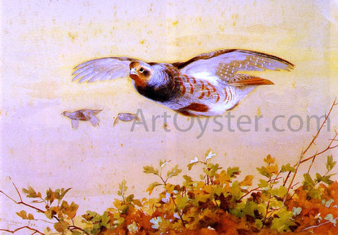 Archibald Thorburn English Partridge In Flight - Hand Painted Oil Painting