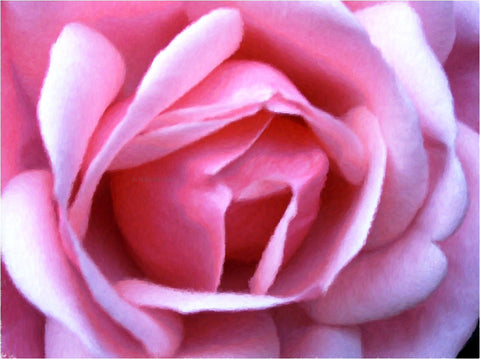 Our Original Collection Exquisite Pink Rose - Hand Painted Oil Painting