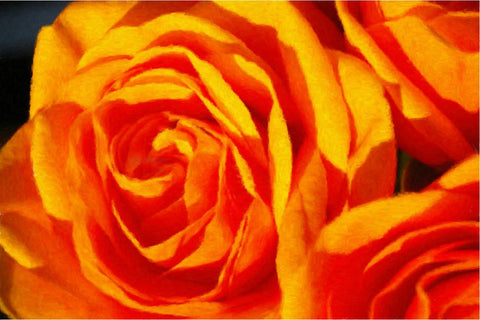Our Original Collection Fabulous Orange Rose - Hand Painted Oil Painting
