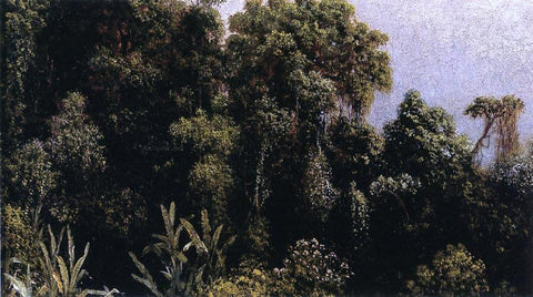 Martin Johnson Heade Forest Study, Brazil - Hand Painted Oil Painting
