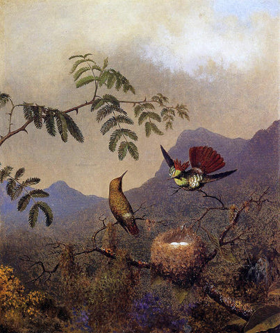 Martin Johnson Heade Frilled Coquette - Hand Painted Oil Painting