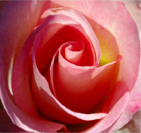Our Original Collection Gorgeous Pink Rose - Hand Painted Oil Painting