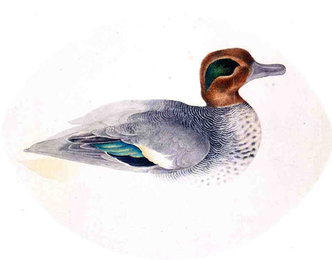 John James Audubon Green Winged Teal - Hand Painted Oil Painting