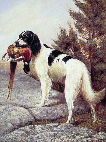 Alexander Pope Hunting Dog with Pheasant - Hand Painted Oil Painting