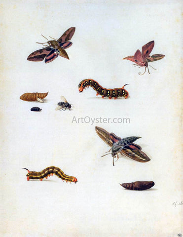 Herman Henstenburgh Insects - Hand Painted Oil Painting