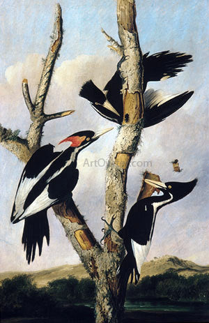 Joseph Bartholomew Kidd Ivory-billed Woodpeckers - Hand Painted Oil Painting