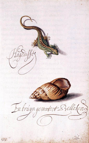 Balthasar Van der Ast Lizard and Shell - Hand Painted Oil Painting