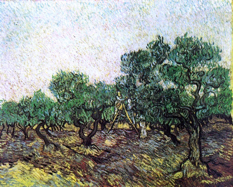 Vincent Van Gogh Olive Picking - Hand Painted Oil Painting