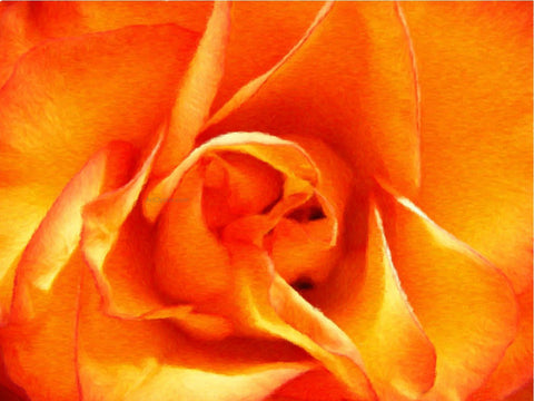 Our Original Collection Orange Rose Closeup - Hand Painted Oil Painting