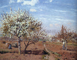 Camille Pissarro Orchard in Bloom at Louveciennes - Hand Painted Oil Painting