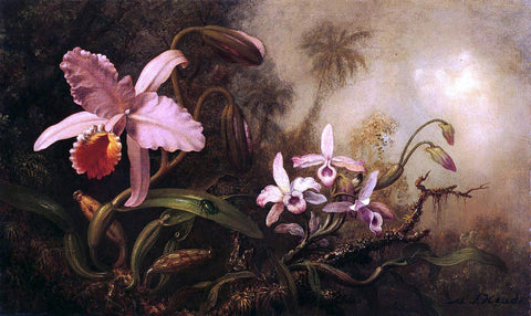 Martin Johnson Heade Orchids and a Beetle - Hand Painted Oil Painting