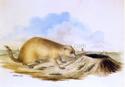 II Titian Ramsey Peale Prairie Dog - Hand Painted Oil Painting