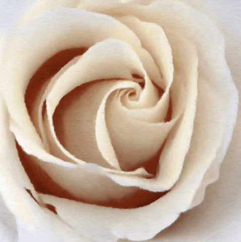Our Original Collection Pretty Sepia Rose - Hand Painted Oil Painting