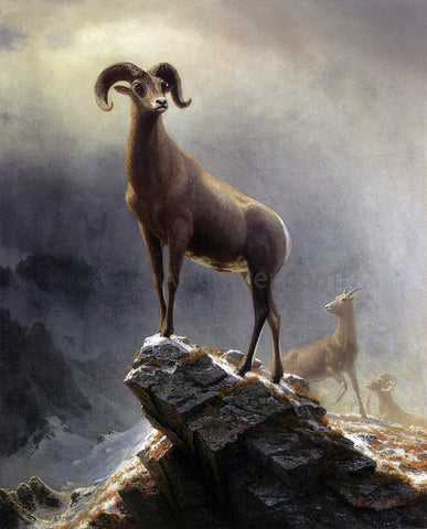 Albert Bierstadt A Rocky Mountain Sheep - Hand Painted Oil Painting