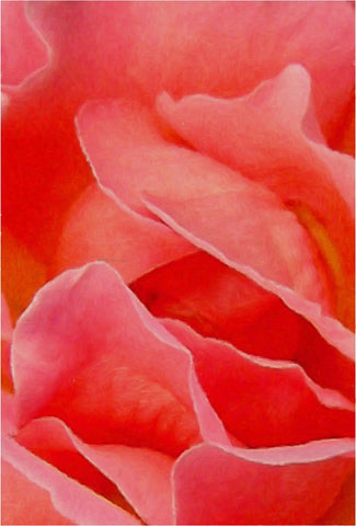 Our Original Collection Rose Petals Abstract - Hand Painted Oil Painting