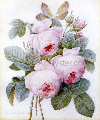 Pierre-Joseph Redoute Roses - Hand Painted Oil Painting