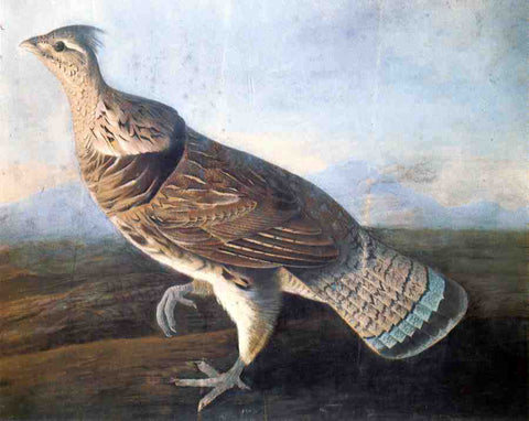 John James Audubon Ruffed Grouse - Hand Painted Oil Painting