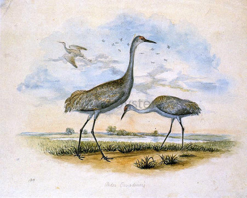 II Titian Ramsey Peale Sandhill Cranes - Hand Painted Oil Painting