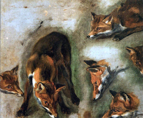 Pieter Boel Studies of a Fox - Hand Painted Oil Painting