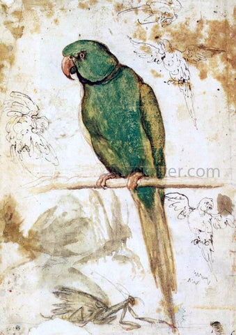 Giovanni Da Udine Study of a Parrot - Hand Painted Oil Painting