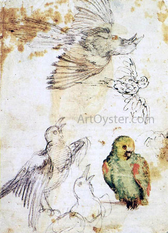 Giovanni Da Udine Study of a Parrot and Other Birds - Hand Painted Oil Painting