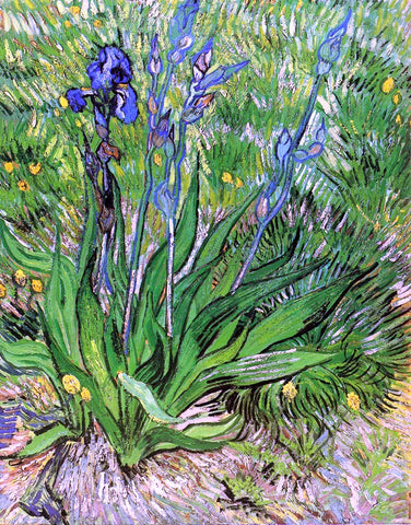 Vincent Van Gogh The Iris - Hand Painted Oil Painting