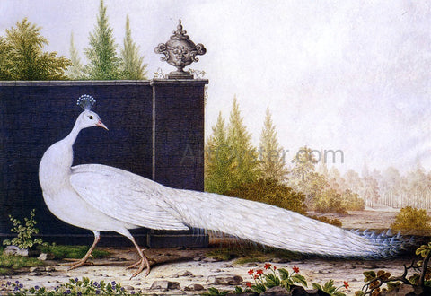 Nicolas Robert The White Peacock - Hand Painted Oil Painting