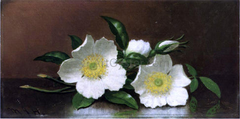 Martin Johnson Heade Two Cherokee Rose Blossoms on a Table (also known as Cherokee Roses) - Hand Painted Oil Painting