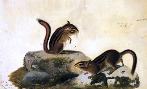 John James Audubon Two Ground Squirrels - Hand Painted Oil Painting