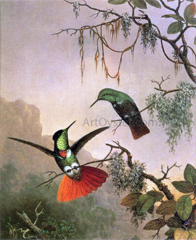 Martin Johnson Heade Two Hooded Visorbearer Hummingbirds - Hand Painted Oil Painting