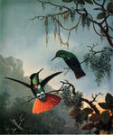 Martin Johnson Heade Two Hummingbirds - Hand Painted Oil Painting