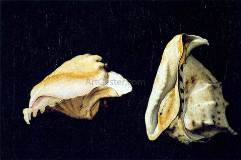 Filippo Napoletano Two Shells - Hand Painted Oil Painting