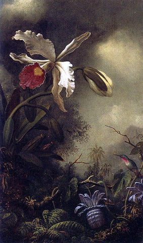 Martin Johnson Heade White Orchid and Hummingbird - Hand Painted Oil Painting