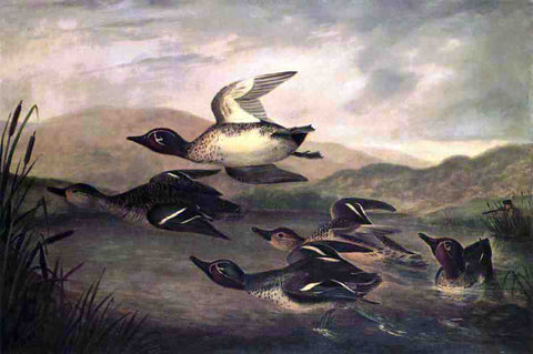 John Woodhouse Audubon Wild Ducks Rising - Hand Painted Oil Painting