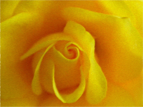 Our Original Collection Yellow Friendship Rose - Hand Painted Oil Painting