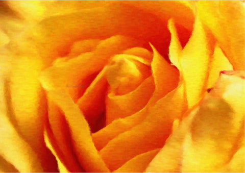 Our Original Collection Yellow Rose in Bloom - Hand Painted Oil Painting