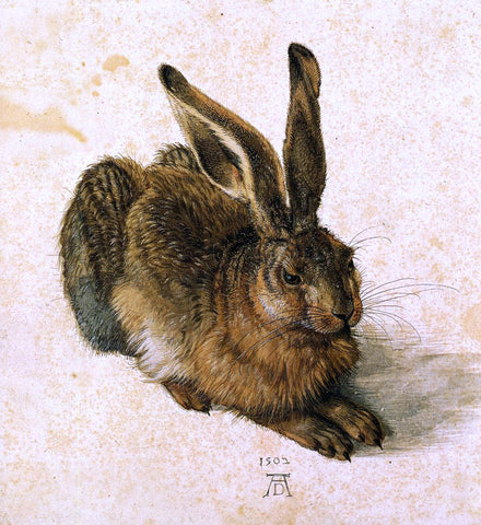 Albrecht Durer A Young Hare - Hand Painted Oil Painting