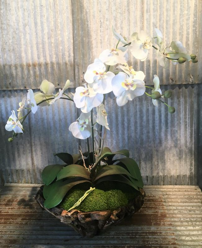 Large Orchid Branchy Bowl