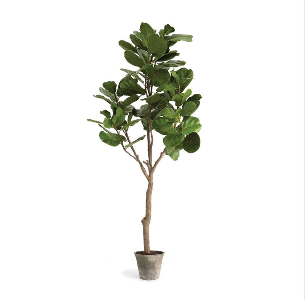 "Faux 79"" Potted Fig Tree"