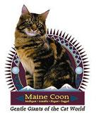 Maine Coon Cat Crest