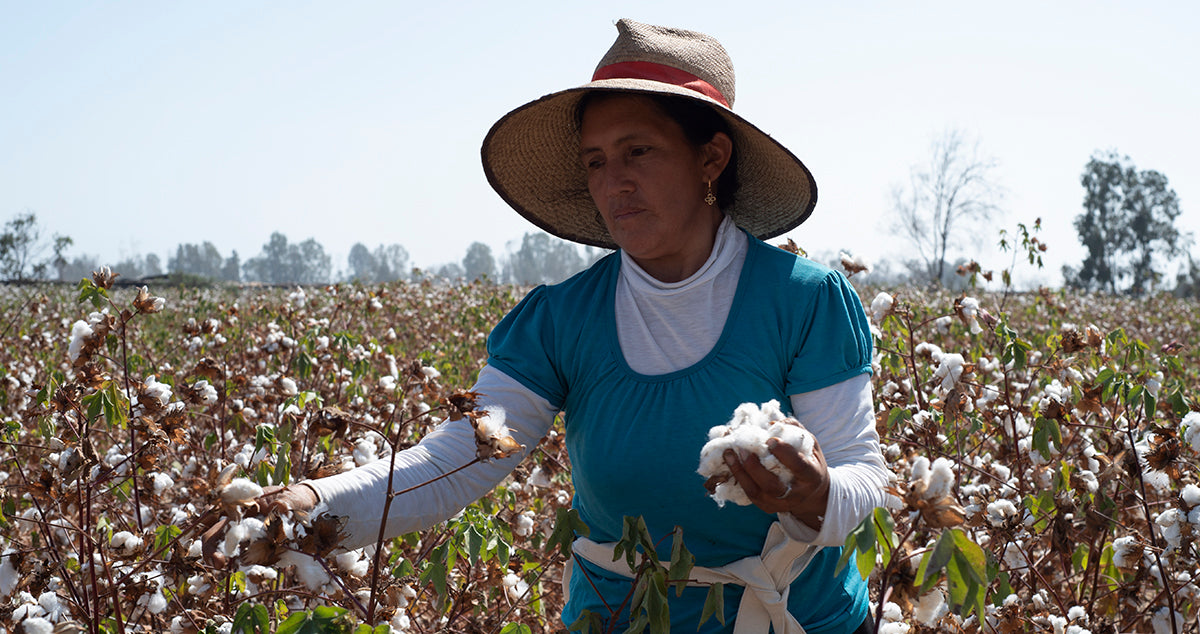 Organic cotton farmer