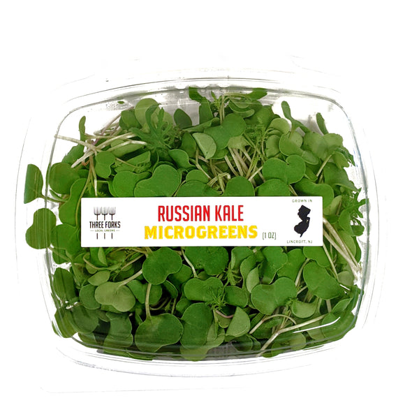 Russian Kale Microgreens (1 oz)