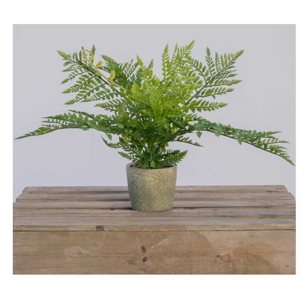Fern Bush in Cement Pot