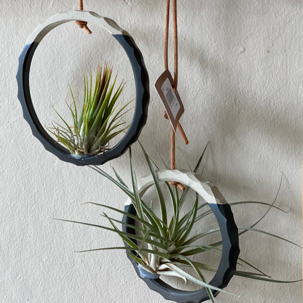 Airplant Rings Alhoka Designs