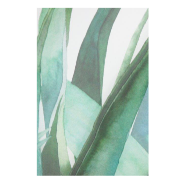 Agave Print B with Glass 45x35cm