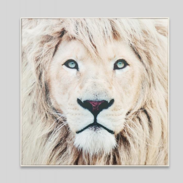 Winter Lion Canvas 100x100cm