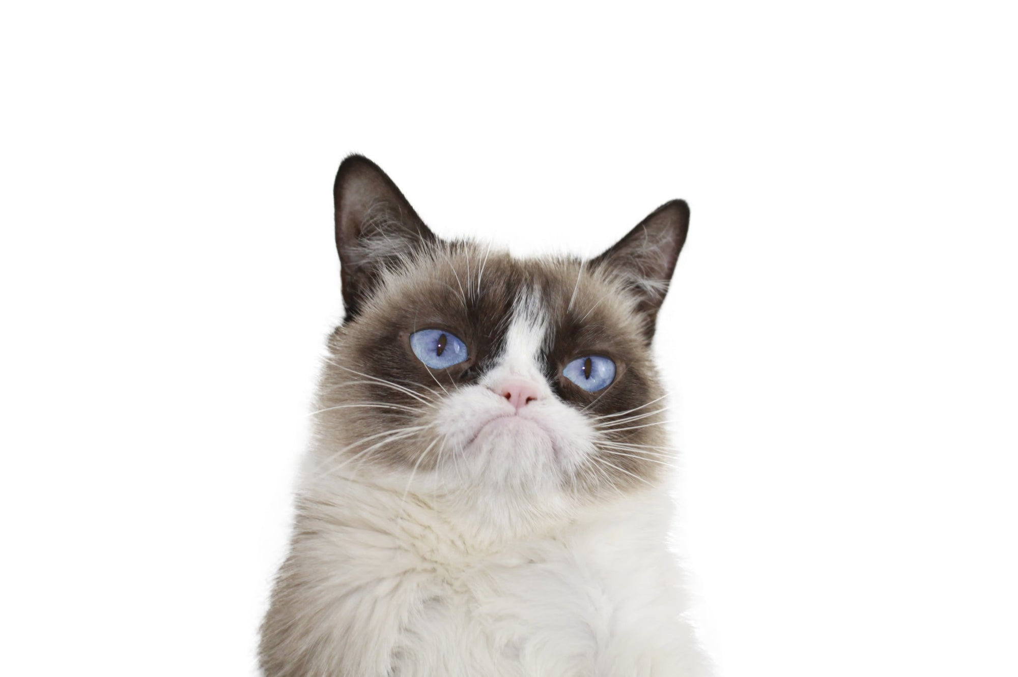 Grumpy-Cat-Grumpy-Cat-Wallpaper purrfect apparel